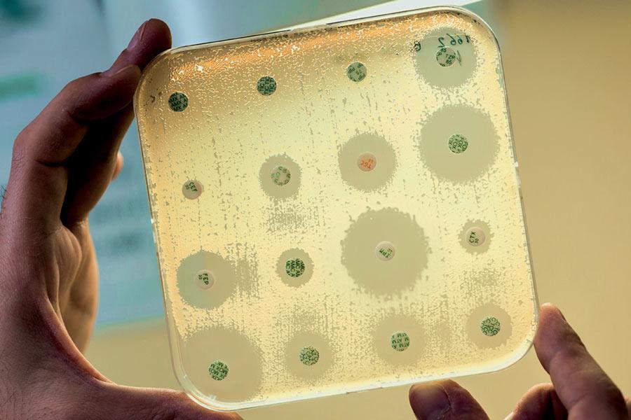 Résistance aux antibiotiques : les phages à la rescousse ?